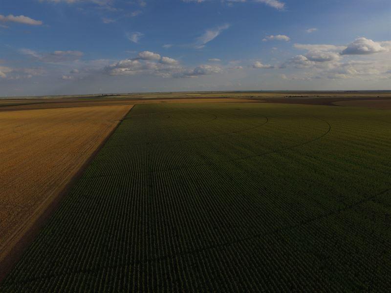 Certified Organic Irrigated Farm : Marienthal : Wichita County : Kansas