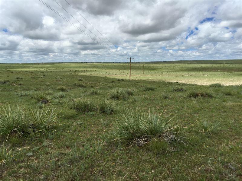 Horse Creek Acreage : Calhan : El Paso County : Colorado
