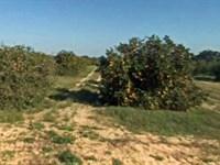 Polk County, Fl $225,000 Reduced : Lake Wales : Polk County : Florida