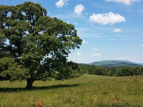 Mountain View Farm - 90 +/- Acres : Ashland : Clay County : Alabama
