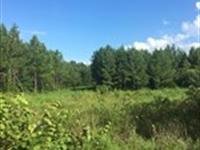 Recreational Tract In Scottsboro : Scottsboro : Jackson County : Alabama