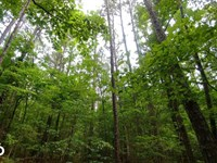40 Acres Timber And Hunting Adjoini : Jerusalem : Conway County : Arkansas