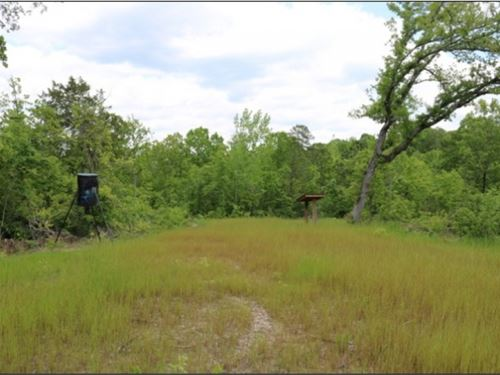 41 Acres In Noxubee County : Shuqualak : Noxubee County : Mississippi