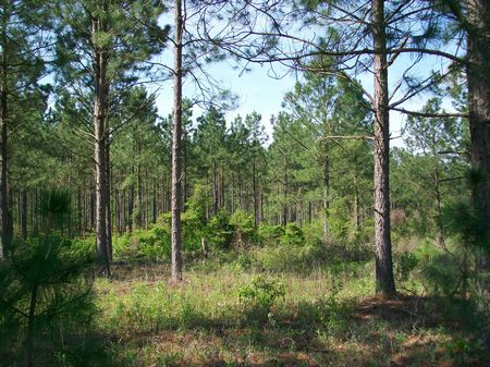 37 Acres Hunting Tract Or Homesite : Vienna : Dooly County : Georgia