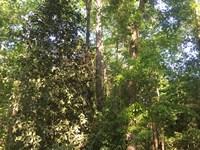 37 +/- Acres Blake Pruitt Rd : Andalusia : Covington County : Alabama