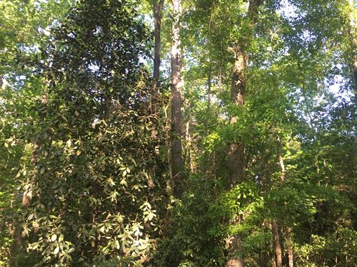 37 +/- Acres Blake Pruitt Rd : Andalusia : Covington County : Alabama