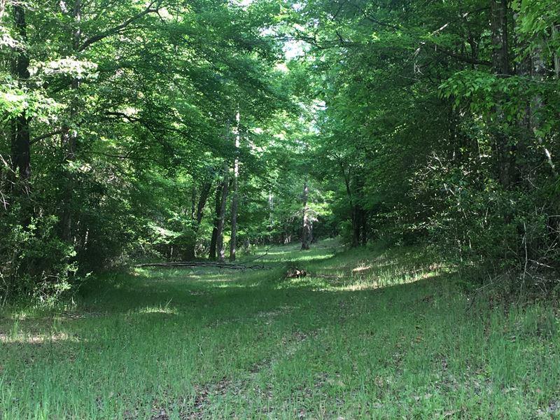 64 +/- Acres Oakey Streak Rd : Red Level : Butler County : Alabama
