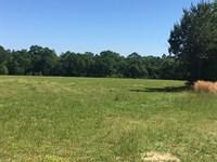20 +/- Acres Camp Eleven Rd : Florala : Covington County : Alabama
