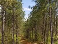Plantation Pine Tract : Shiloh : Harris County : Georgia