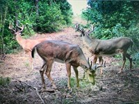 Deer And Timber Tract : Shiloh : Harris County : Georgia