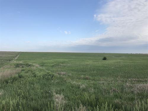 Liebenthal 80 : Liebenthal : Rush County : Kansas