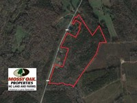 40 Acres of Timber Land For Sale : Warrenton : Warren County : North Carolina