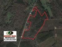 40 Acres of Timber Land For Sale : Warrenton : Warren County : North Carolina