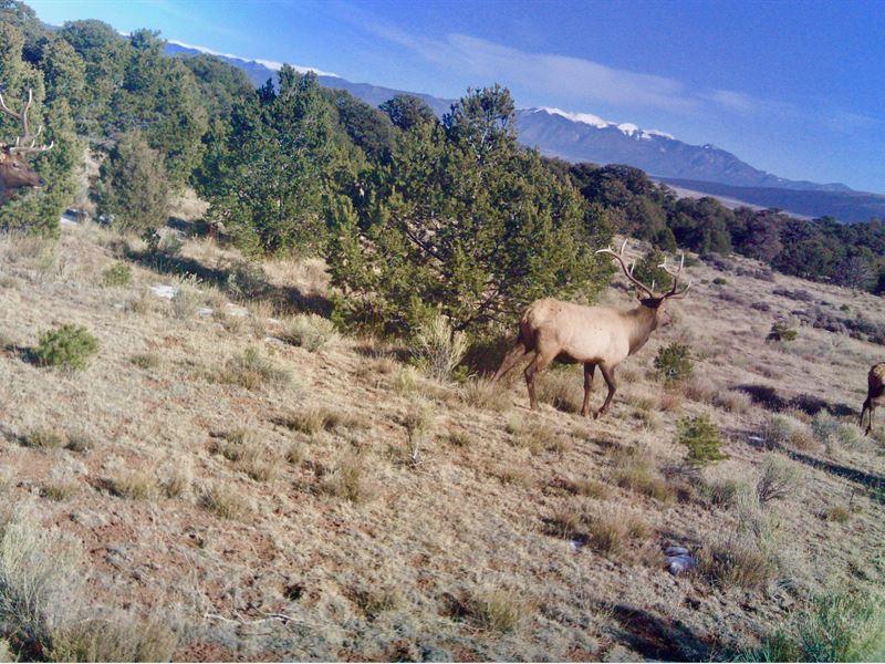 Taos Range Ranch : Tres Piedras : Taos County : New Mexico