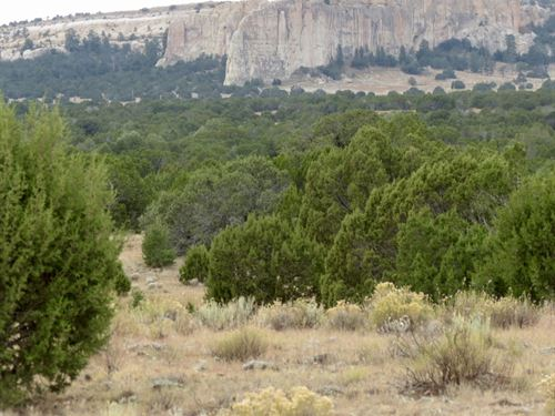 Inscription Rock Ranch : Grants : Cibola County : New Mexico
