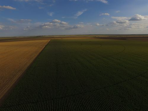 Organic Irrigated Investment Farm : Marienthal : Wichita County : Kansas