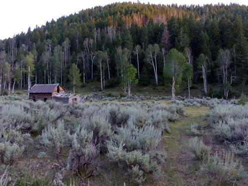 Book Cliffs Bucks And Bulls : Loma : Garfield County : Colorado