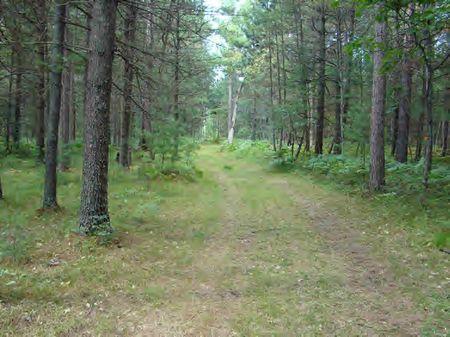 Roscommon Big Buck Oasis : Roscommon : Roscommon County : Michigan