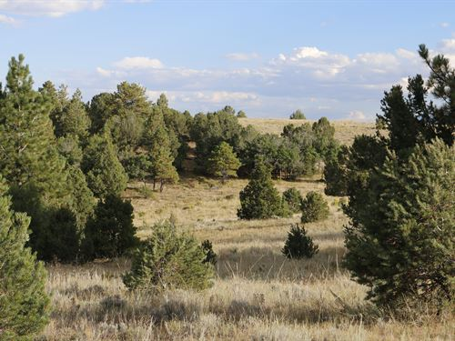 Honey Hole On Texas Creek : Westcliffe : Custer County : Colorado