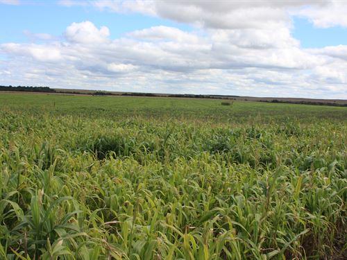 Eagle Creek Pivot : O'neill : Holt County : Nebraska