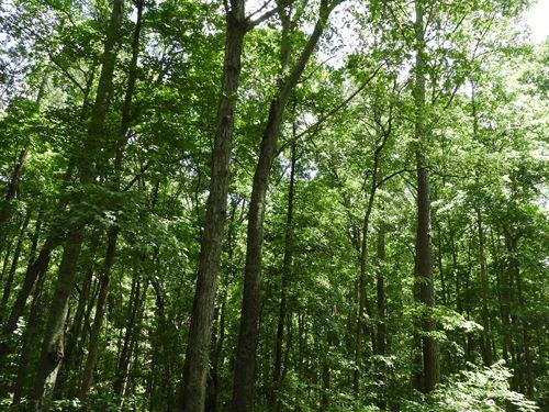 South Little New York Trail : Whitesburg : Carroll County : Georgia