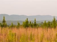 Bogan Mtn. View : Summerville : Chattooga County : Georgia