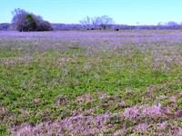 Montgomery County - 220 Acres +/- : Montgomery : Montgomery County : Alabama