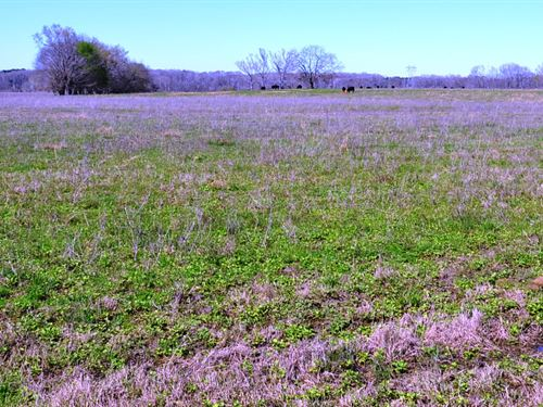 Montgomery County - 220 Acres +/- : Montgomery : Alabama