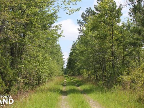 National Forest 690 Acres : Bonneau : Berkeley County : South Carolina