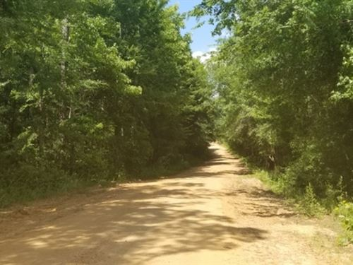 34.5 Ac - Timberland With Ponds : Sikes : Winn Parish : Louisiana