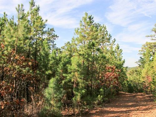 Stream From Escape 10 : Wilburton : Latimer County : Oklahoma