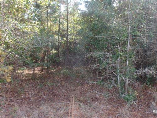 11.4 Ac Pine Timberland Tract - Pri : 51003 : Vernon Parish : Louisiana