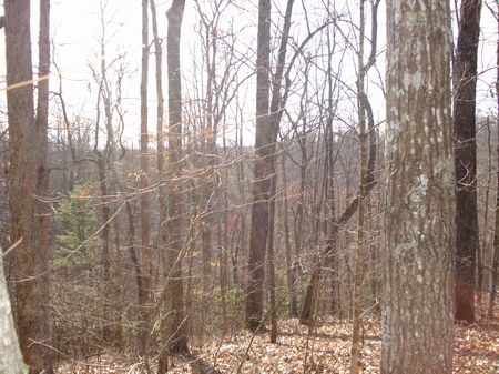 Great Land For The Avid Hunter : Deer Lodge : Morgan County : Tennessee