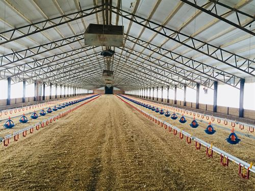Poultry Farm With 30 Acres : Cameron : Milam County : Texas