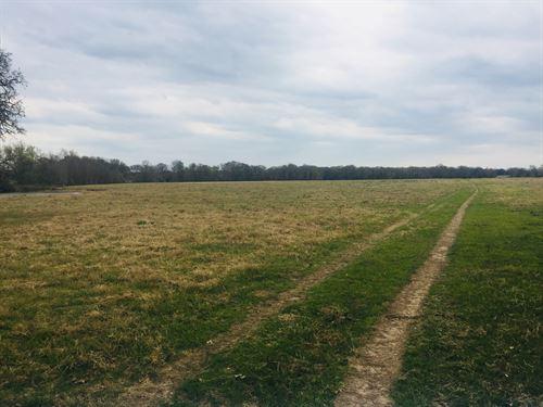 162.84 Acres, Elmo Road : Calvert : Robertson County : Texas