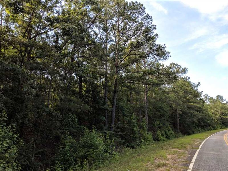 Wooded Investment Property Located : Ideal : Macon County : Georgia