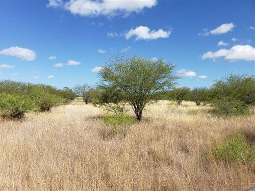 Just Reduced, The Chilipitin Ran : San Diego : Jim Wells County : Texas