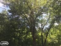 Albany Homesite/Development/Timber : Albany : Livingston Parish : Louisiana