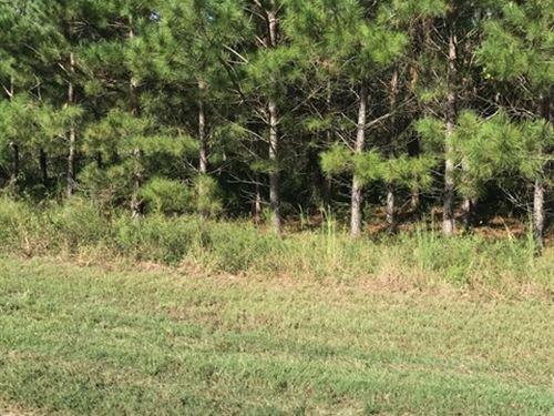 Deer Hunters Dream : Gordon : Houston County : Alabama