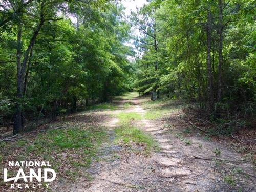 300 Acre Hunting Tract : Ellaville : Schley County : Georgia