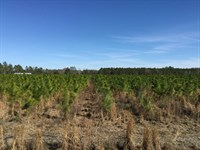 40 Acres In North Central Florida : Mc Alpin : Suwannee County : Florida