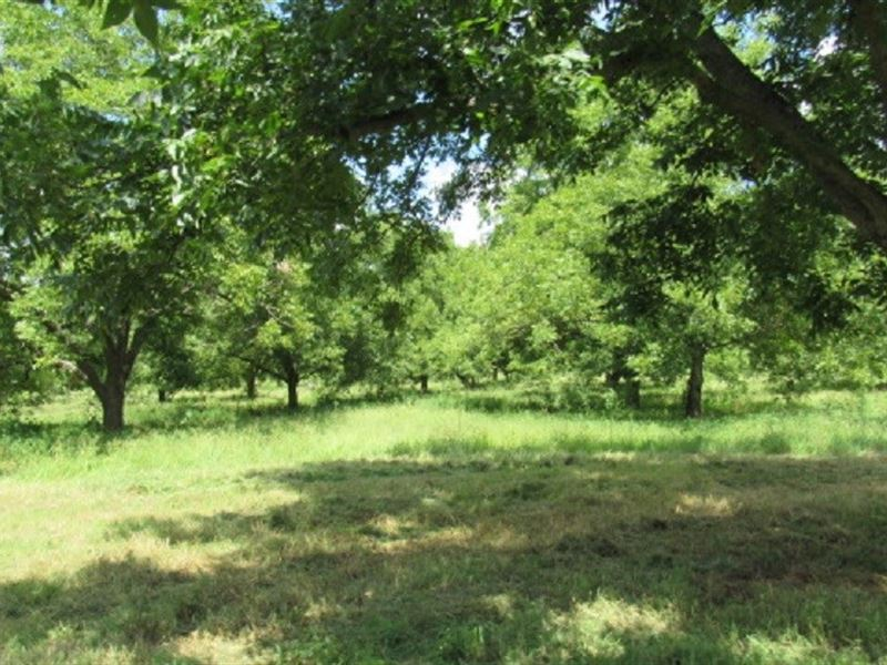 Texas Pecan Orchard In Lamar County Farm For Sale Arthur City