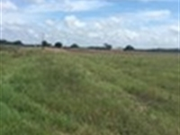 432 Acres In Citra : Citra : Lake County : Florida
