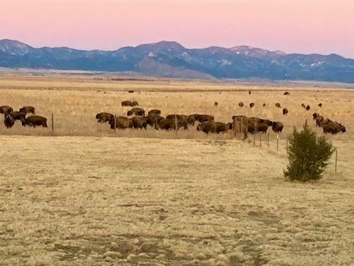 Bison View Ranch : Cimarron : Colfax County : New Mexico