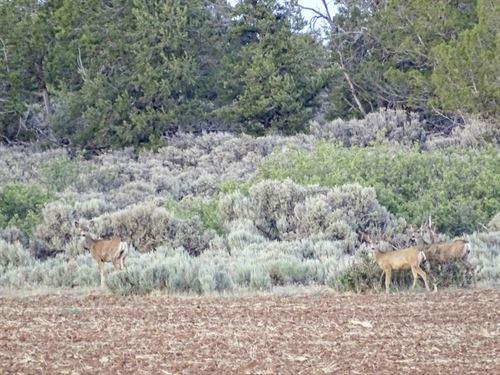 Dolores County Line 270 : Egnar : Dolores County : Colorado