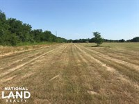 50 Acres Mabank, Pasture, Trees, Po : Mabank : Kaufman County : Texas