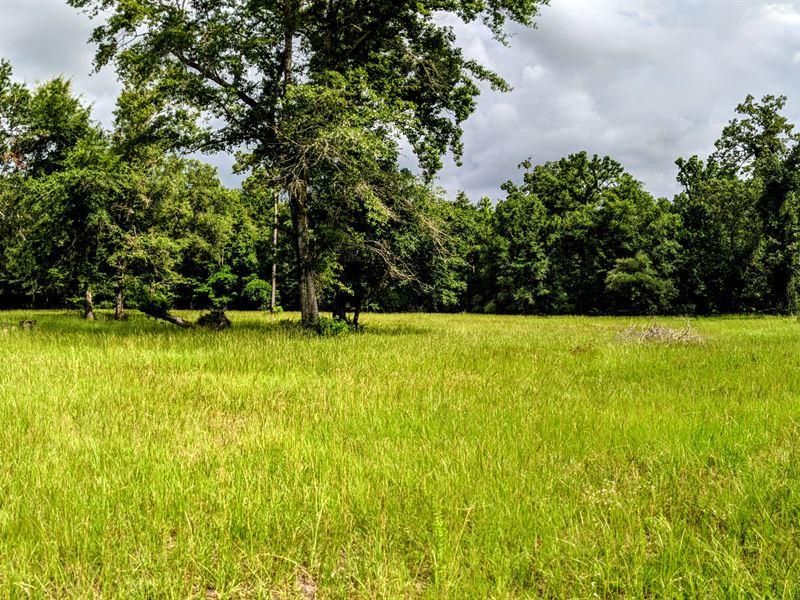 Timber And Hunting Near Tallahassee : Crawfordville : Wakulla County : Florida