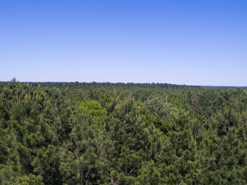 Indian Rock - 2235 Acres : Gilmer : Upshur County : Texas