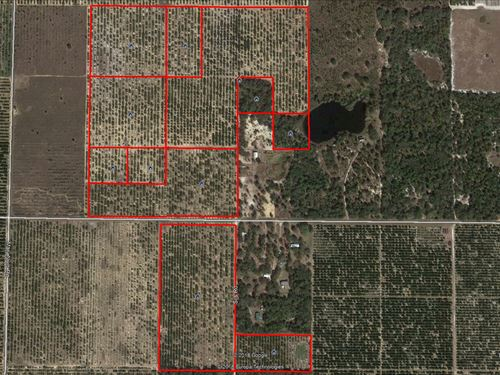 106 Acres Citrus Grove On Dog Yard : Lake Wales : Polk County : Florida