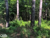 Calhoun County Tree Farm : Pittsboro : Calhoun County : Mississippi